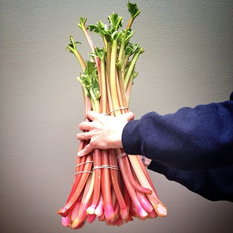 Beautiful rhubarb. Photo credit: Taste of Nova Scotia