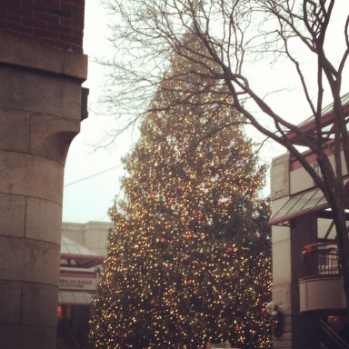 Boston's Christmas tree, a gift from Nova Scotians.