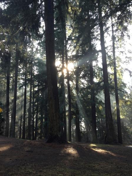 Sunbeams bursting through the trees.