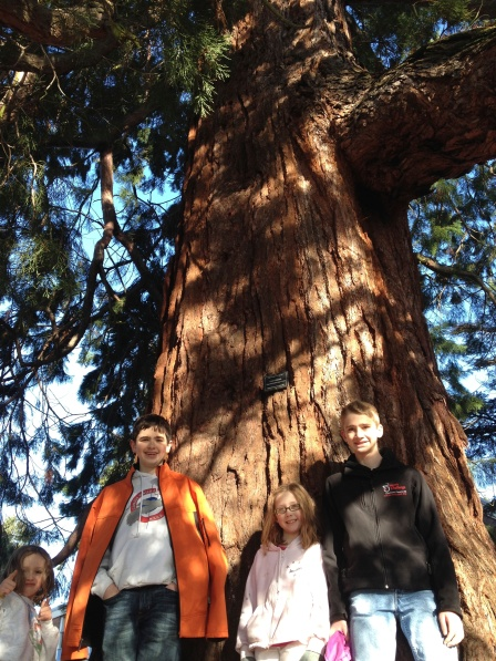Standing in front of a sequoia tree.