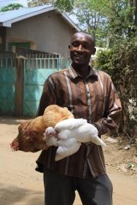 Fresh chickens, headed to market